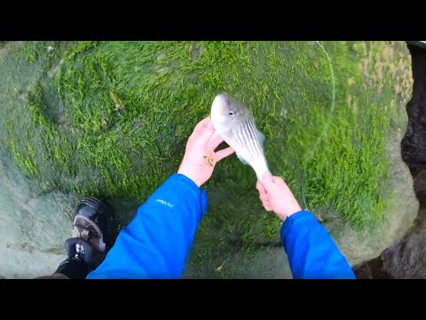 The Stripers Are Here! Spring Shore Fishing Rhode Island 2020