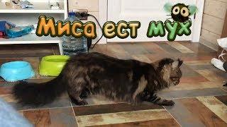МЕЙН-КУН МИСА ЕСТ МУХ / Переезд на второй этаж