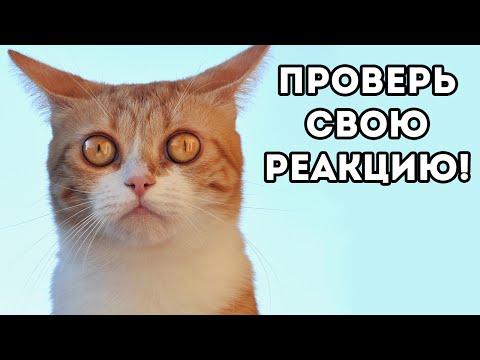 бесплатные и без регистрации сайт знакомства для секса киев