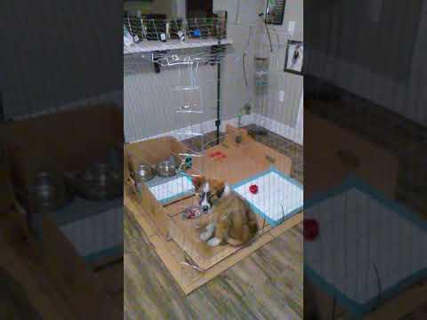 DIY - Dog Cage - easy to make