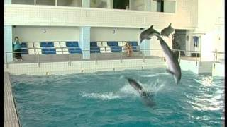 Свадьба в дельфинарии. На татарском языке.VOB