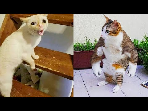 Try Not To Laugh or Grin While Watching Funny Animals Compilation #49