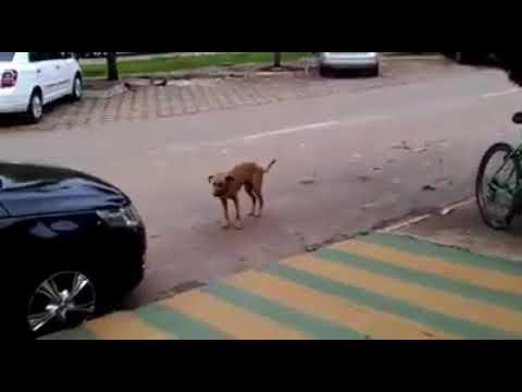 Omunye dancing dog