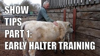 SHOW TIPS PART 1 | EARLY HALTER TRAINING