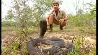 Crocodile Hunter « Die schwarze Mamba » | [1/4] |