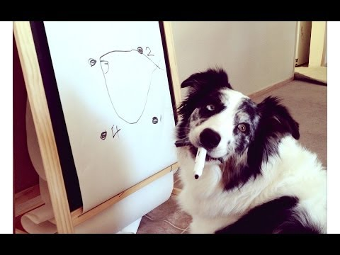 Splash learns to draw a circle - dog training smartest tricks