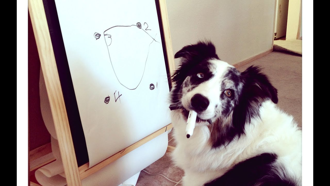 Splash Learns To Draw A Circle Dog Training Smartest Tricks