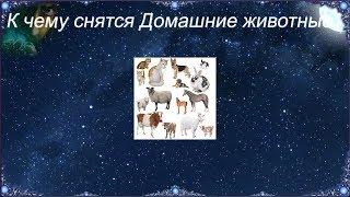 К чему снятся Домашние животные (Сонник)