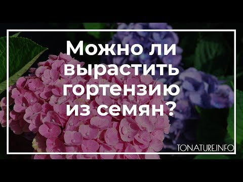 Можно ли вырастить гортензию из семян? | toNature.Info