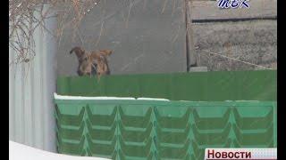 В Искитиме собственники участка бояться выходить в огород, где бегает соседская собака