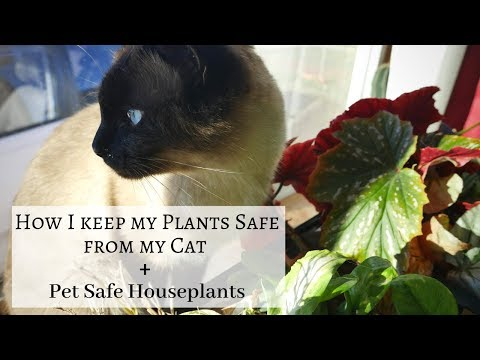 Cat Safe Plants And How I Protect Houseplants From My Cat