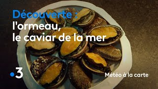 L'ormeau, le caviar de la mer - Météo à la carte