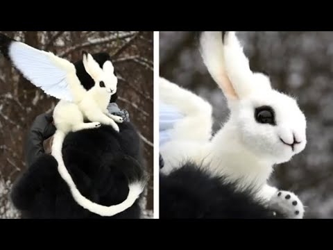 5 Unique Creatures, You Will Regret If You Don't See Them!