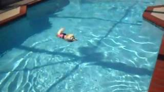 Pomeranian's Can Swim!