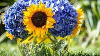 Купите цветы с доставкой в сервисе AMF(Сервис заказа и доставки цветов по всему миру http://goo.gl/JDnnq1 Преподнести цветы – теперь так просто! http://goo.gl/JDnnq..., 2015-02-09T13:51:35.000Z)