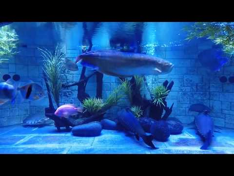 1 Hour of 1100 Gallon Aquarium Relaxation and White Noise
