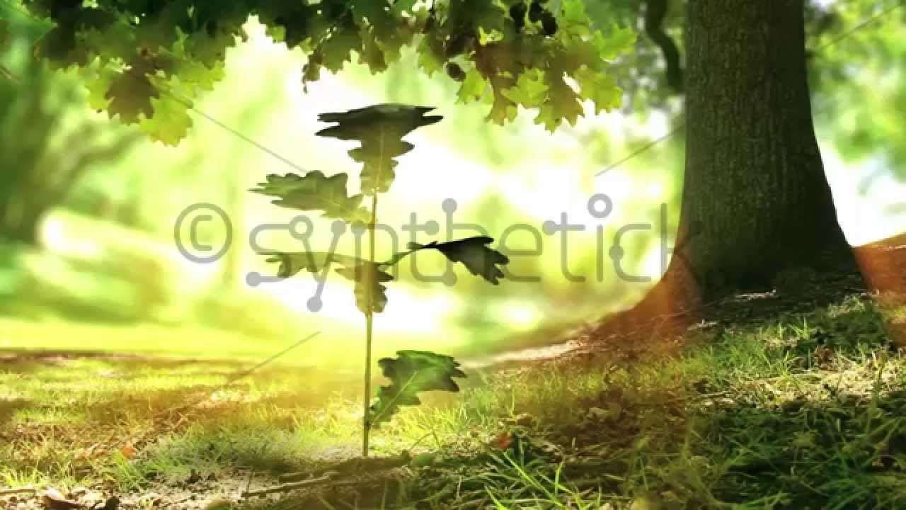 Growing Plant Under Oak Tree Beautiful Nature The Last 5 Seconds