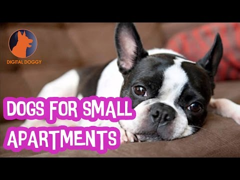 Dogs For Small Apartments