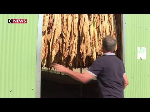 Périgord : l'unique usine de tabac en France vit ses derniers jours