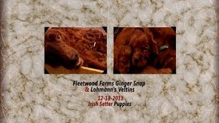 Fleetwood Farms Ginger Snap & Lohmann's Veltins: Six Week Update