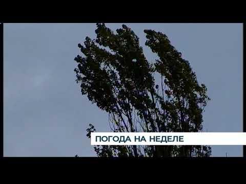 Неделя вКалининграде будет прохладная идождливая