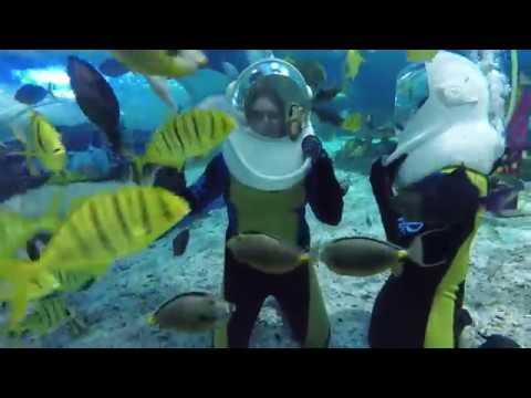 Aquanaut Experience | Manila Ocean Park | Our Travel Adventures