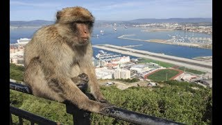 How Wild Animals Are Adapting Life in the City - Most Extreme Animals In The World