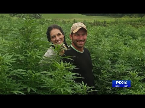 NY woman making a name for herself with her handcrafted CBD oil