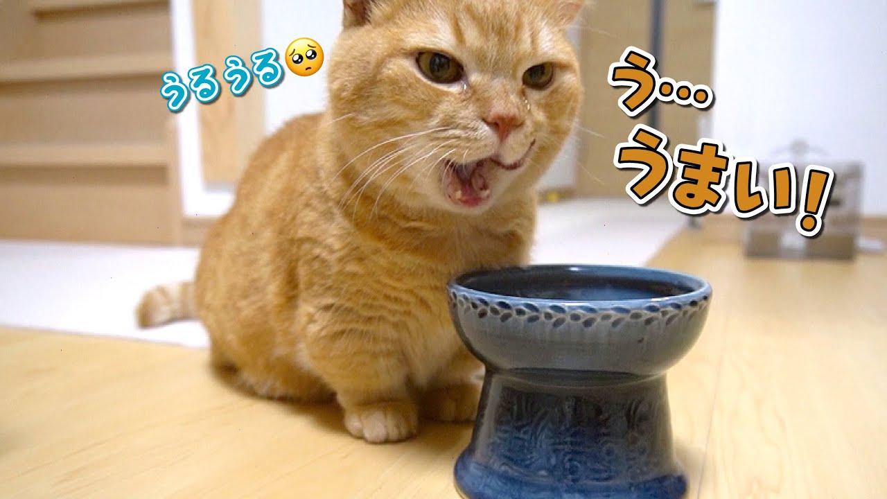 美味しいご飯に夢中になりすぎて涙を浮かべる猫