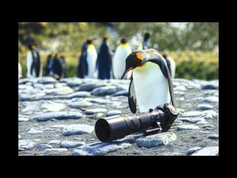 2014 Photographic Expedition: Falkland Islands, South Georgia and the Antarctic Peninsula