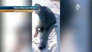 Водители на трассе в Новосибирске спасли собаку, брошенную на погибель