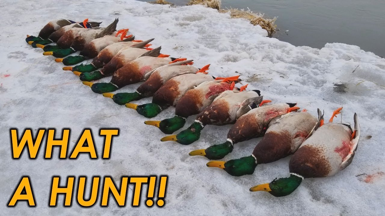 Download The BEST Mallard Hunt of My Life | Public Land Duck Hunting 2019