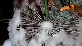 Мастер класс- большие цветы из изолона( фоамирана).ИДЕЯ на НОВЫЙ .