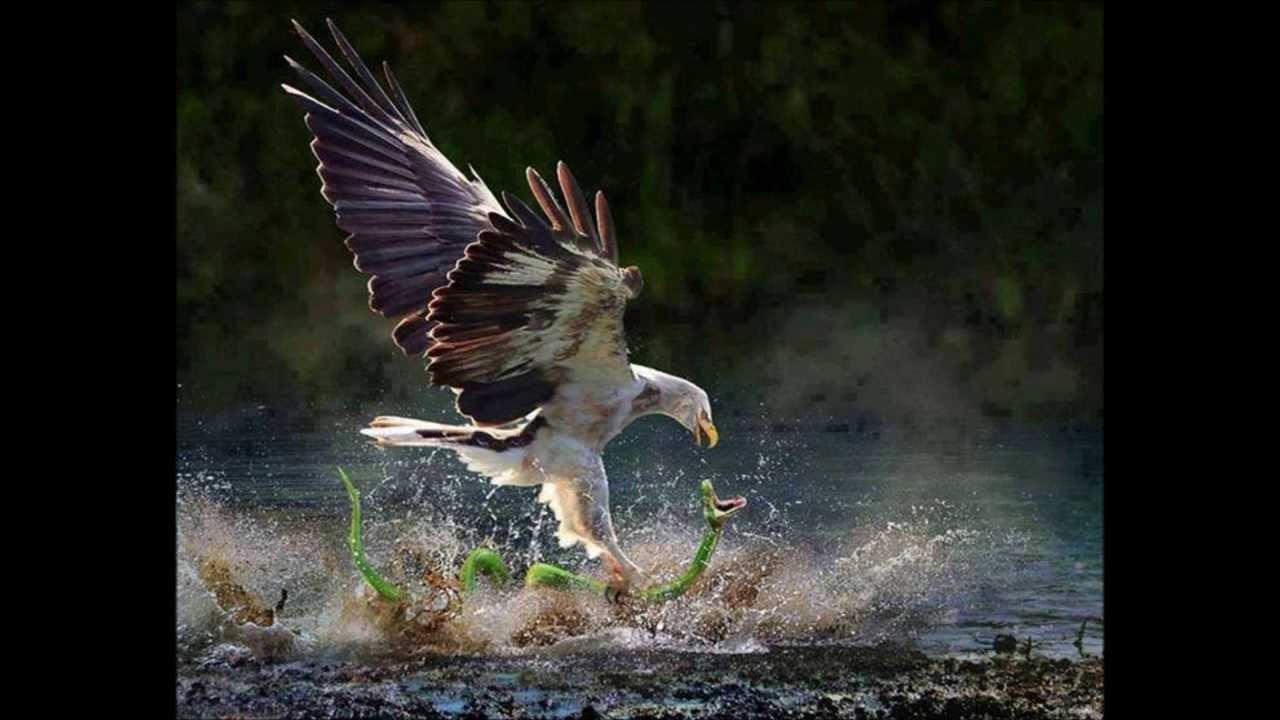Nature Beautiful animals exclusive photo
