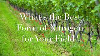 What's the Best form of Nitrogen for Your Field