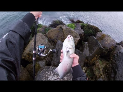 7/31/20 Surf Fishing Long Island In A Storm: Bluefish, Dolphins And More!
