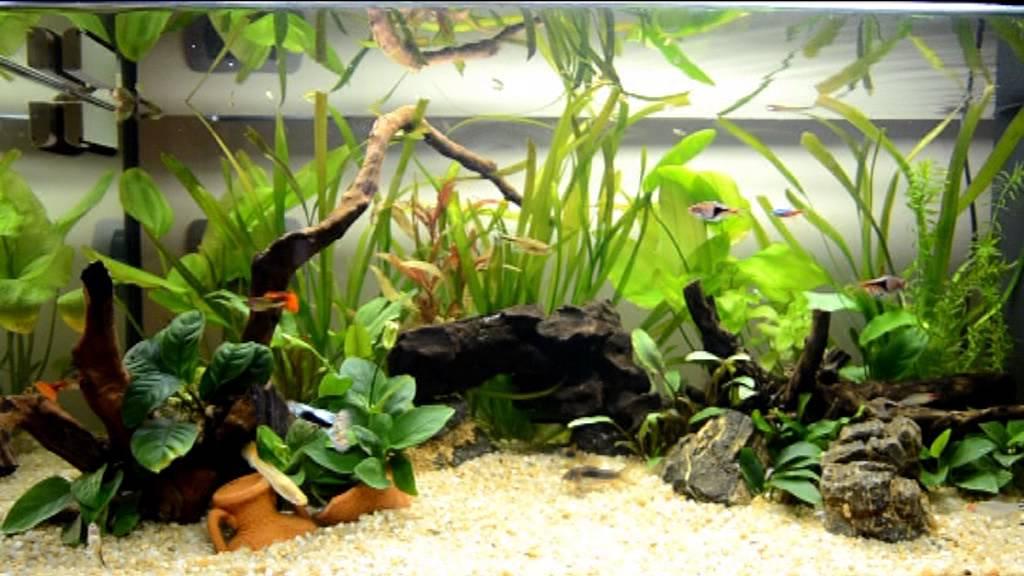 Acquario tropicale d 39 acqua dolce haquoss 100 lt poecilia for Acqua acquario