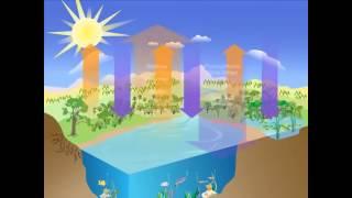 Carbon cycle zero carbon