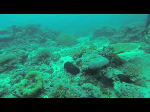 Coral Kingdom Fiji January 2017