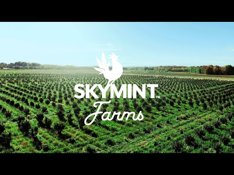 SKYMINT Brands™ Brings Michigan's Largest Sungrown Cannabis Farm To Harvest With The Launch Of SKYMINT Farms™