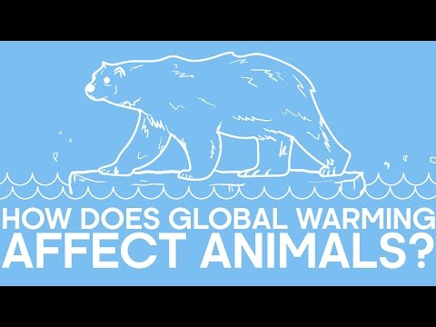 How Does Global Warming Affect Animals? | Earth Unplugged