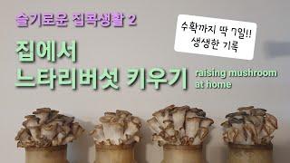 [코로나 집콕생활] 내돈내산 느타리버섯 키우기(7일 전…