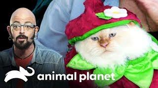 ¿Qué hace a un gato terrorista? | Mi gato endemoniado | Animal Planet