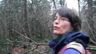 Inventaire de bois mort en vieille forêt dans la région de la Capitale Nationale   Partie 1