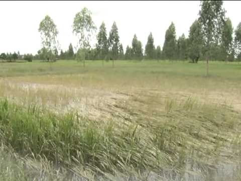 รายงานพิเศษ ชาวบ้านเดือดร้อนบ่อบำบัดน้ำเสียโรงแป้งมันพัง อ.พระยืน จ.ขอนแก่น