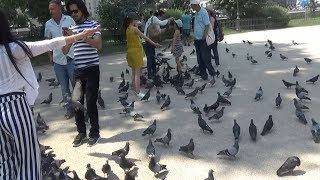 Tourism in France || PLAY WITH PIGEONS AT NOTRE DAME SQUARE IN PARIS