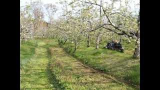 今季初草刈り...乗用草刈り機 ..除草剤無使用