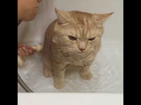 Happy Cats   Bath time! 🐱🚿