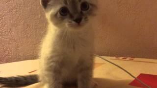 Мой новый кот кароч