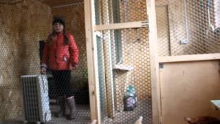 Копия видео обзор курятника 1 часть. охлебининно.(мисс-киса. юная птичница делает обзор курятника . проба пера . JOIN VSP GROUP PARTNER PROGRAM: https://youpartnerwsp.com/ru/join?87573., 2015-04-14T10:29:02.000Z)